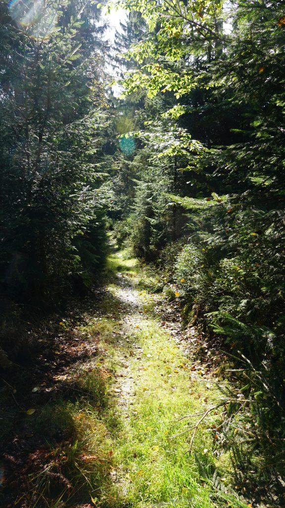 Unberührte Wälder